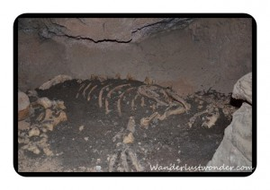 Fake Skeleton in Cave 300x212 The Arizona Sonora Desert Museum in Tucson