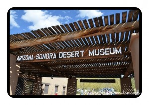 Museum Sign 300x212 The Arizona Sonora Desert Museum in Tucson
