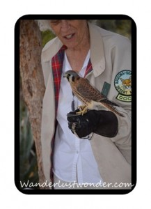 Woman and Falcon 217x300 The Arizona Sonora Desert Museum in Tucson