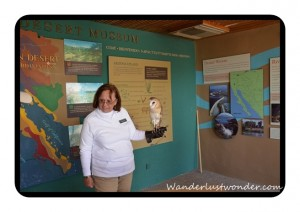 Woman with Owl 300x212 The Arizona Sonora Desert Museum in Tucson