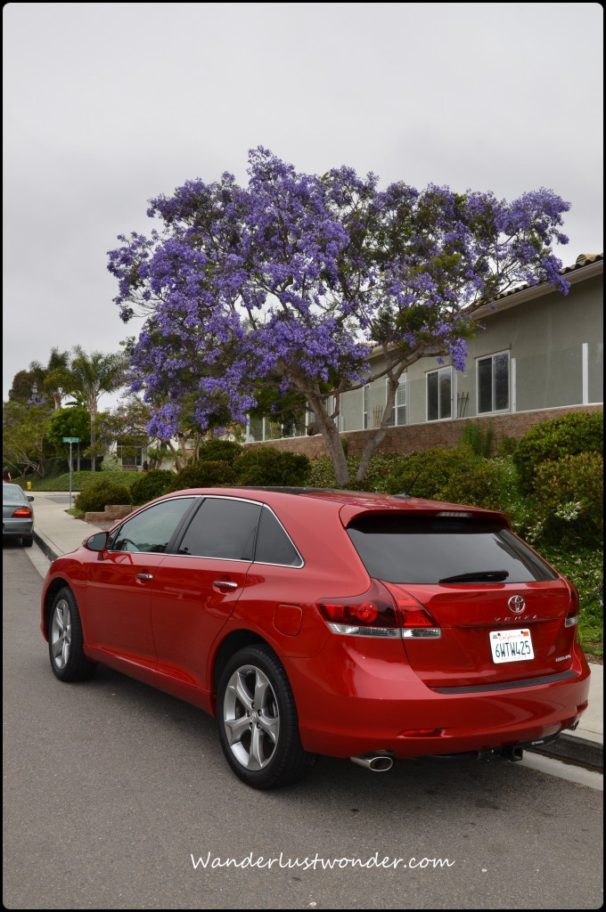 Venza with the beautiful Jacaranda trees in the area.
