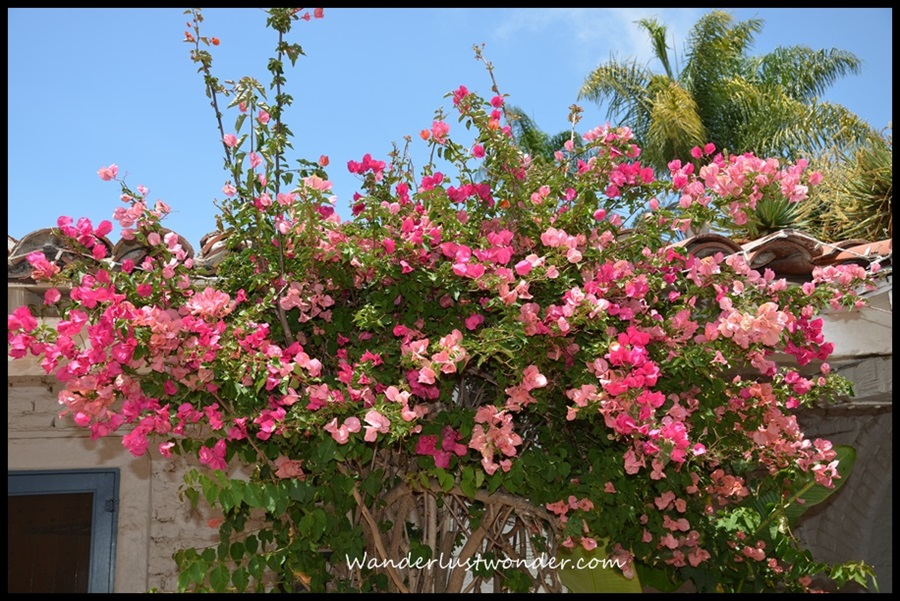 Gorgeous colors of bougainvillea were also everywhere!