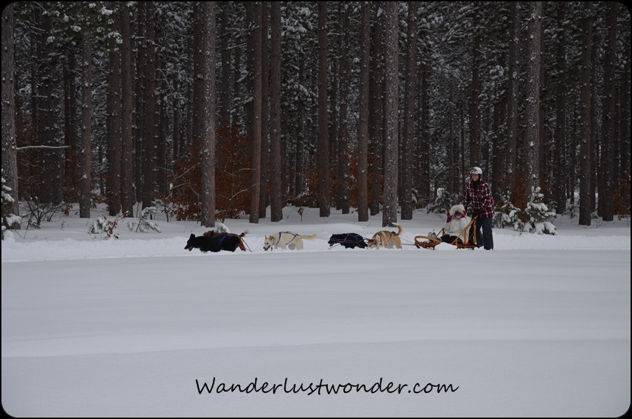 An amazing shot of the sled, snow, and woods.