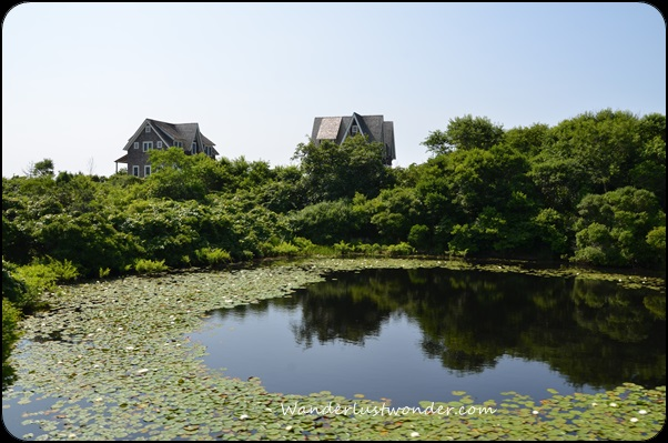 Pond with lily pads and homes on Block Island, RI