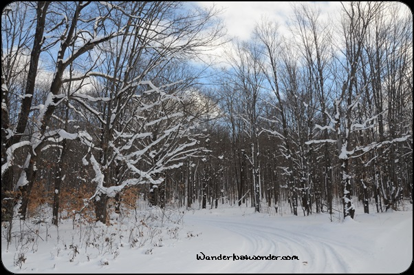 Snowy path through the woods.