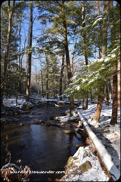 Snowy stream in the Great Smoky Mountains National Park.