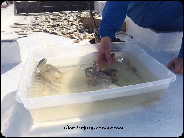 Fish and crab in the container.