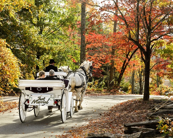 Wedding carriage. Photo courtesy of Forrest Hills Resort.